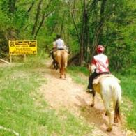 Horse Riding Trail Gallery | OK Trading Post in Mountain